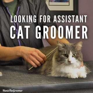 Assistant Cat Groomer