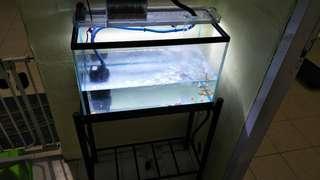 2ft tank stand light pump bloodworm
