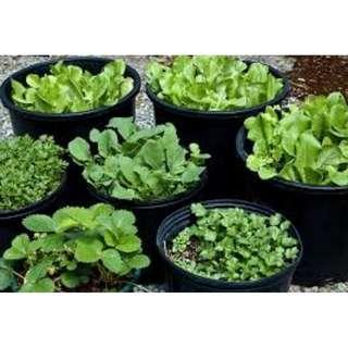 Organic vegetables pot , fruit tree bonsai, flower plant wholesales , call for order// internet retail biz look for partner .