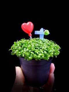 Happy Plant for office & farewell gift!