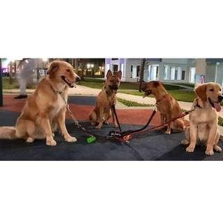 Dog Obedience Training Package (10 sessions x 1.5hrs) - Weekly