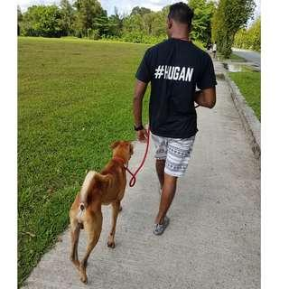 Dog Walks - Daily (40 mins / session)