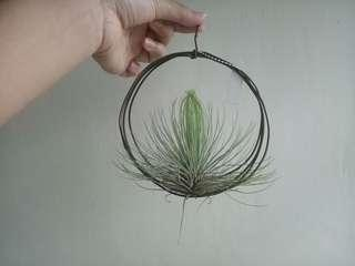 Airplant Hanger (#2)