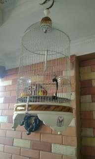 Kandang lovebird #TIUBL