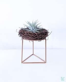 Mix: Nest with Air plant and geometric holder