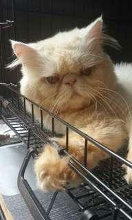 Mating cat