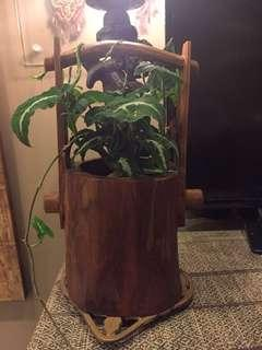 Wooden planter with plants