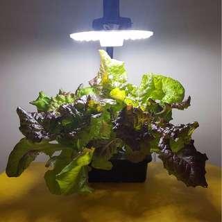 GreenGift Mini Urban Farm - Hydroponic Starter Kit (Picture 2)