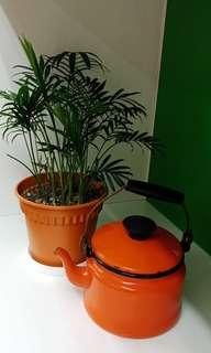 Enamel Pot for Plant Watering OR display