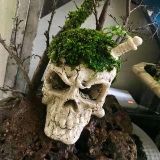 Skeleton With Moss