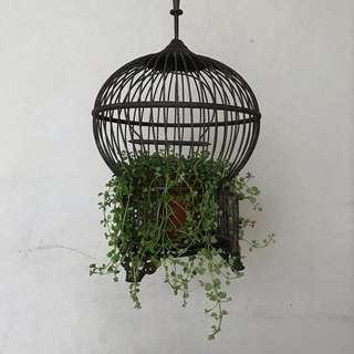 Copper Bird Case With Plant