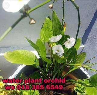 3s for RM20-Water Orcid Plant Aquarium Melati