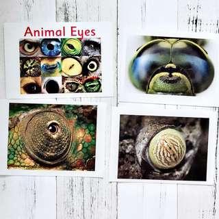 🚚 Flashcards Animal Eyes (HEGURU, SHICHIDA, RIGHT BRAIN TRAINING) BRAND NEW Flashcards for right brain training