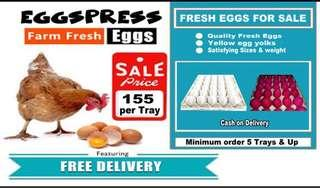 Farm Fresh Eggs for sale