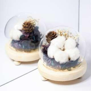 Preserved Flowers with White Cotton