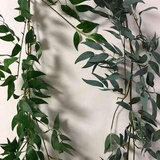 Hanging willow 1.8m long