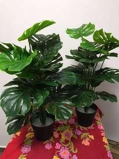 Artificial Monsteria plant