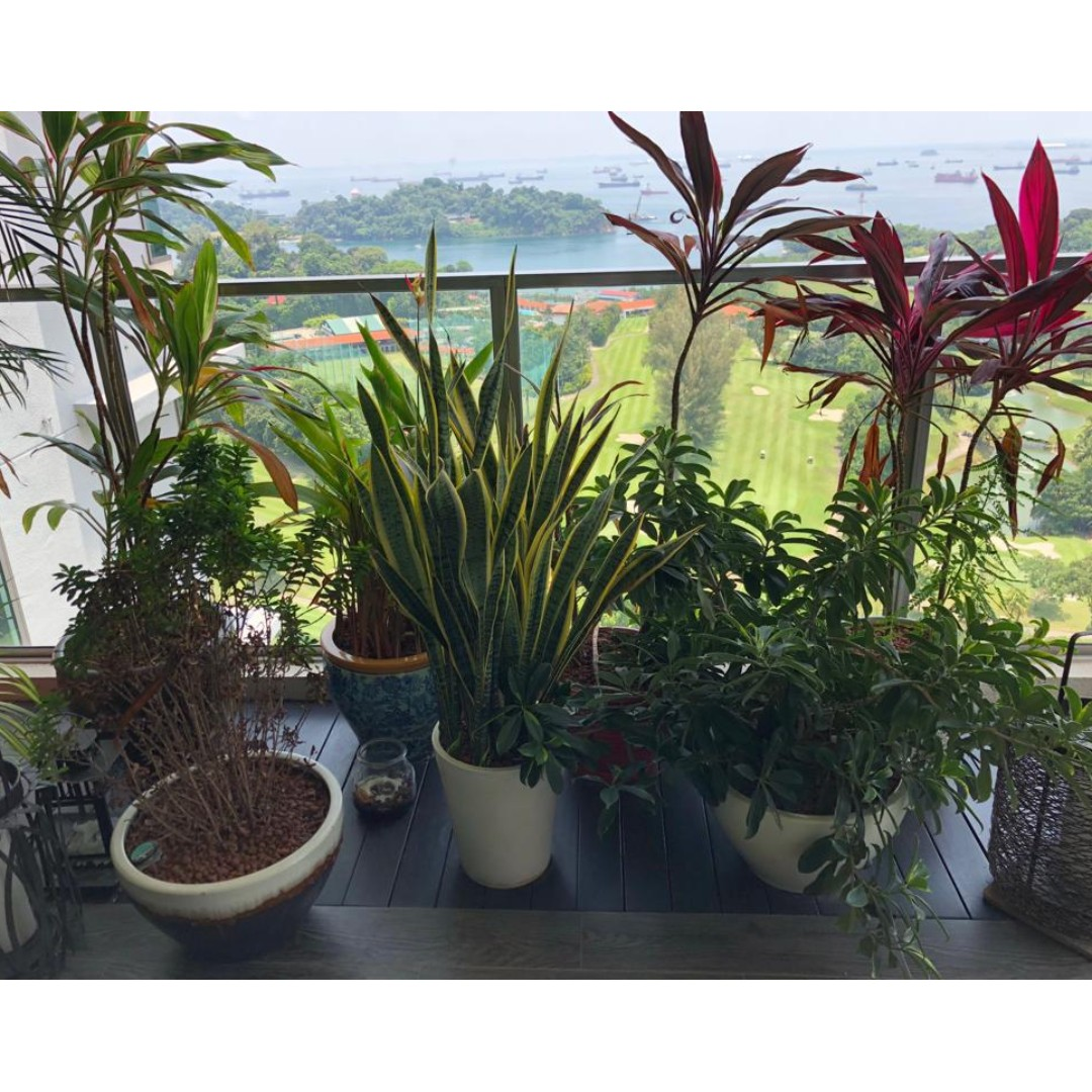 Outdoor Pots And Plants Various