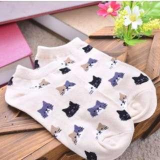 Korean Socks Cat Design