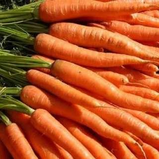 Carrot seed 50pcs