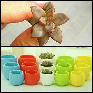 GARDENING - Buy A Plant + Buy A Cute Colorful Pot