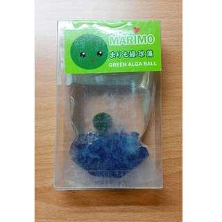 新寵物 紀念品 北海道 藻球 幸福綠球藻 Marimo