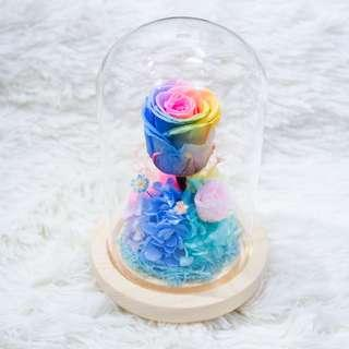 Pastel Rainbow Preserved Rose Dome