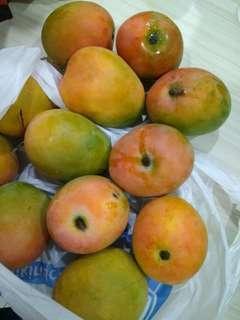 Mangga Gedong Gincu Matang Pohon Asli Majalengka / 5 kg