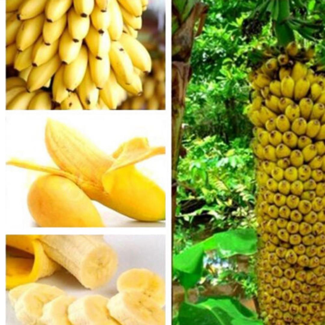 30 Pcs Dwarf Banana Seeds Bonsai Tree Tropical Fruit Seeds Balcony Flower for Home Plants