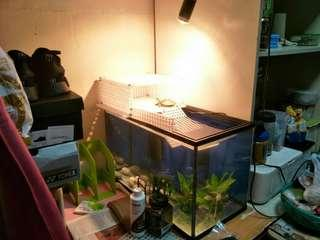 CHEAP Everything you see here for $100 Turtle Terrapin tank set