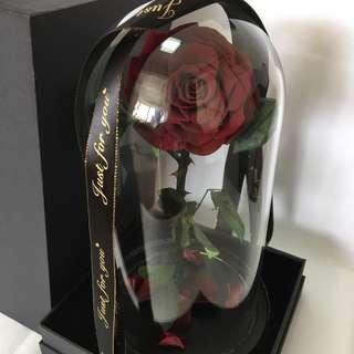🚚 Premium Preserved Roses in Big Glass Dome