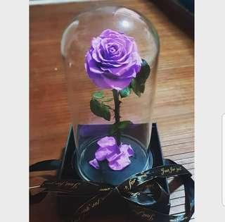 🚚 Free delivery Preserved Rose in big glass dome