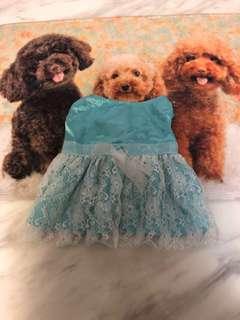 Pet's blue dress