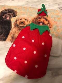 Pet's strawberry costume