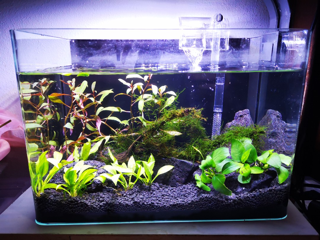 tank setup for a customer pet supplies for fish fish tanks on