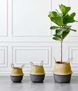 小藤袋 (可放盆栽)
