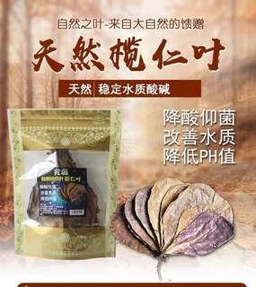 High quality Natural Catappa Leaf