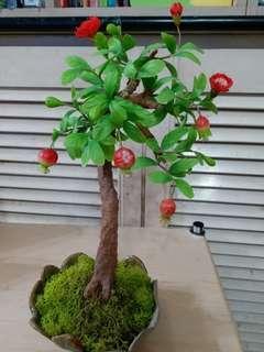 自製一盆日本粘土番石榴盆栽