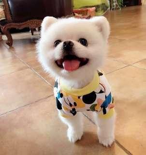 🚚 (PO) #72 Pets Dog T Shirt W Sleeves Disney Cartoon/Goofy Designs