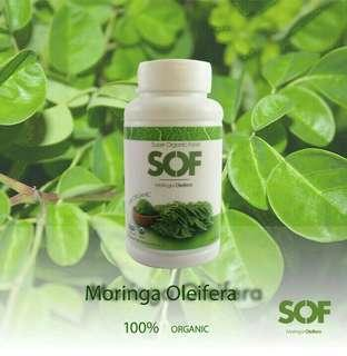 Organic Halal Herb Supplement SOF Moringa Oleifera Leaf Leaves Capsule