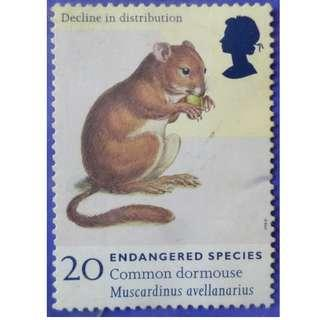 Stamp UK Great Britain 1998 Endangered Species Common Dormouse (Muscardinus avellanarius) 20p