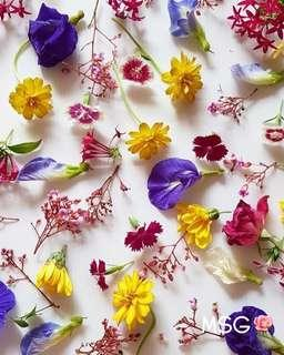 FRESH EDIBLE FLOWERS / GARNISHES