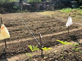 出租農地 一起種植有機蔬果及抗癌藥草在都市減壓