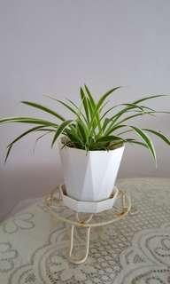 Offer-Spider Plants Air Purifier