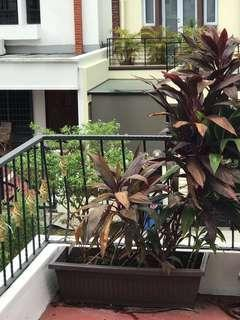 Tropical Plant with planter box 1