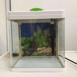 GOOD CONDITION Tiny Aquarium (suitable for small fish)