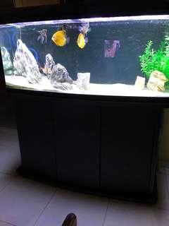 4ft Fish Tank
