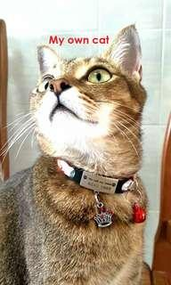 Customized Engraving  Pet Collar Tag With Free Bell & Charms For Kittens/ Cats