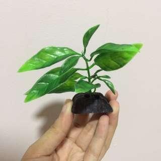 AQUARIUM GREEN PLANT