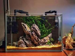 No-frills nano Aquascape
